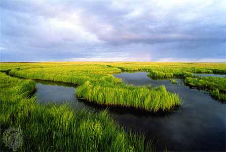 britannica-marshland