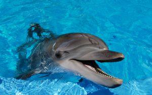 1204372_dolphin_2