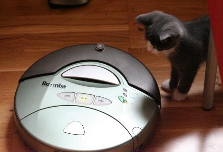 Roomba Meets Kitten (Image by Eirik Newth)