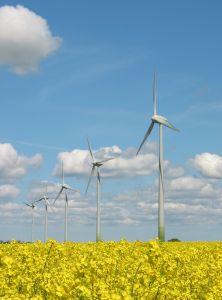 752410_windmills_and_yellow_field