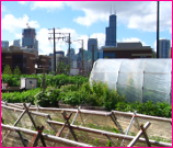 A City Garden in Chicago