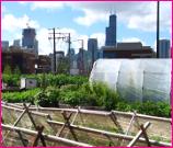 A City Garden in Chicago