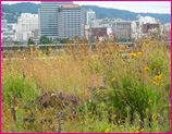 green-roof-resources-thumb