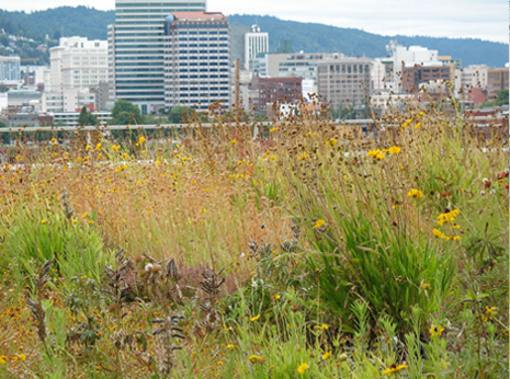 green-roof-resources