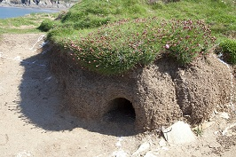 seabird dwelling