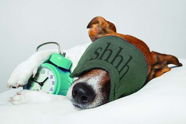 dog sleeping with alarm