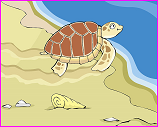 NOAA sea turtle cartoom